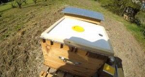 chasse abeille