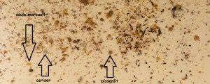 pollen 11.04.15