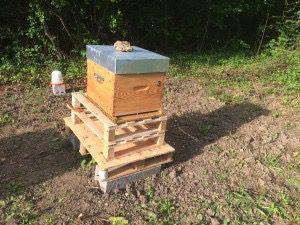 Nouvelles ruches !