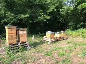 27 Juin 2015 : visite des ruchers