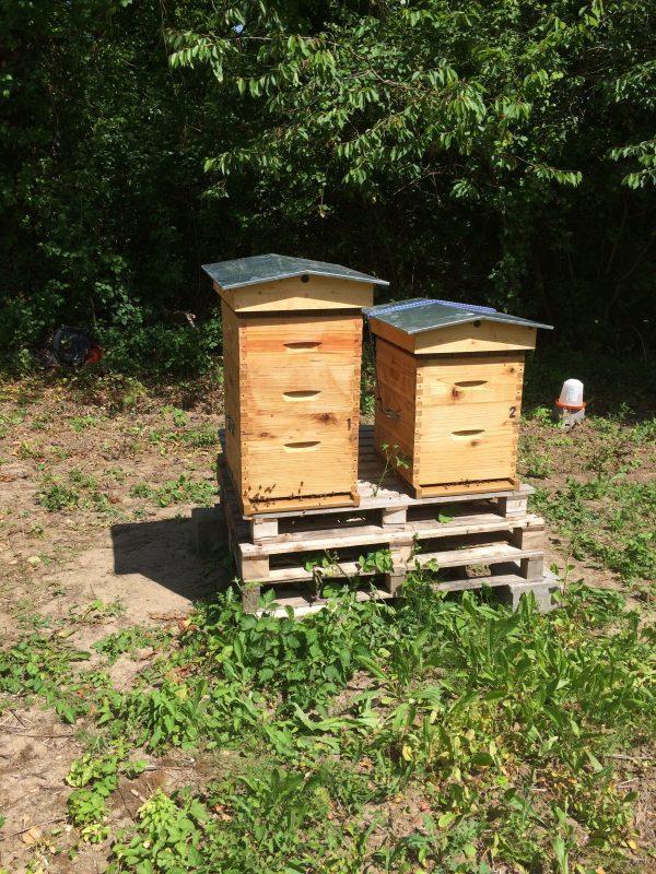Visite des ruchers et pose des hausses