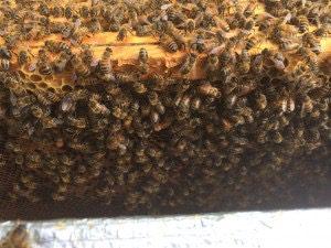 Résultat de la division de la ruche 4