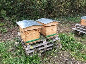 Où en sont les ruches en ce 1er décembre 2015 ?