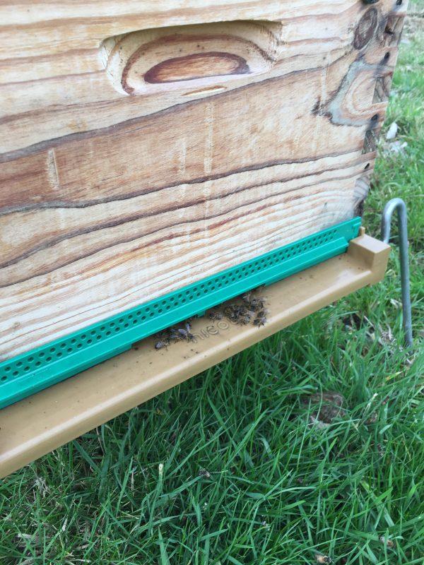 Le temps doux conduit à nourrir les essaims avec 2 semaines d'avance