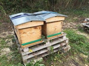 Après le froid à -8°C, contrôle des ruches