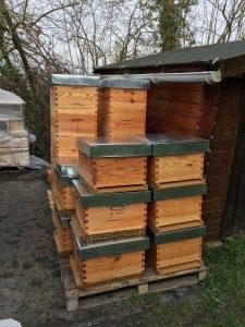 10 ruches...