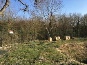 Nouveaux ruchers, cadres, hausses et abeilles