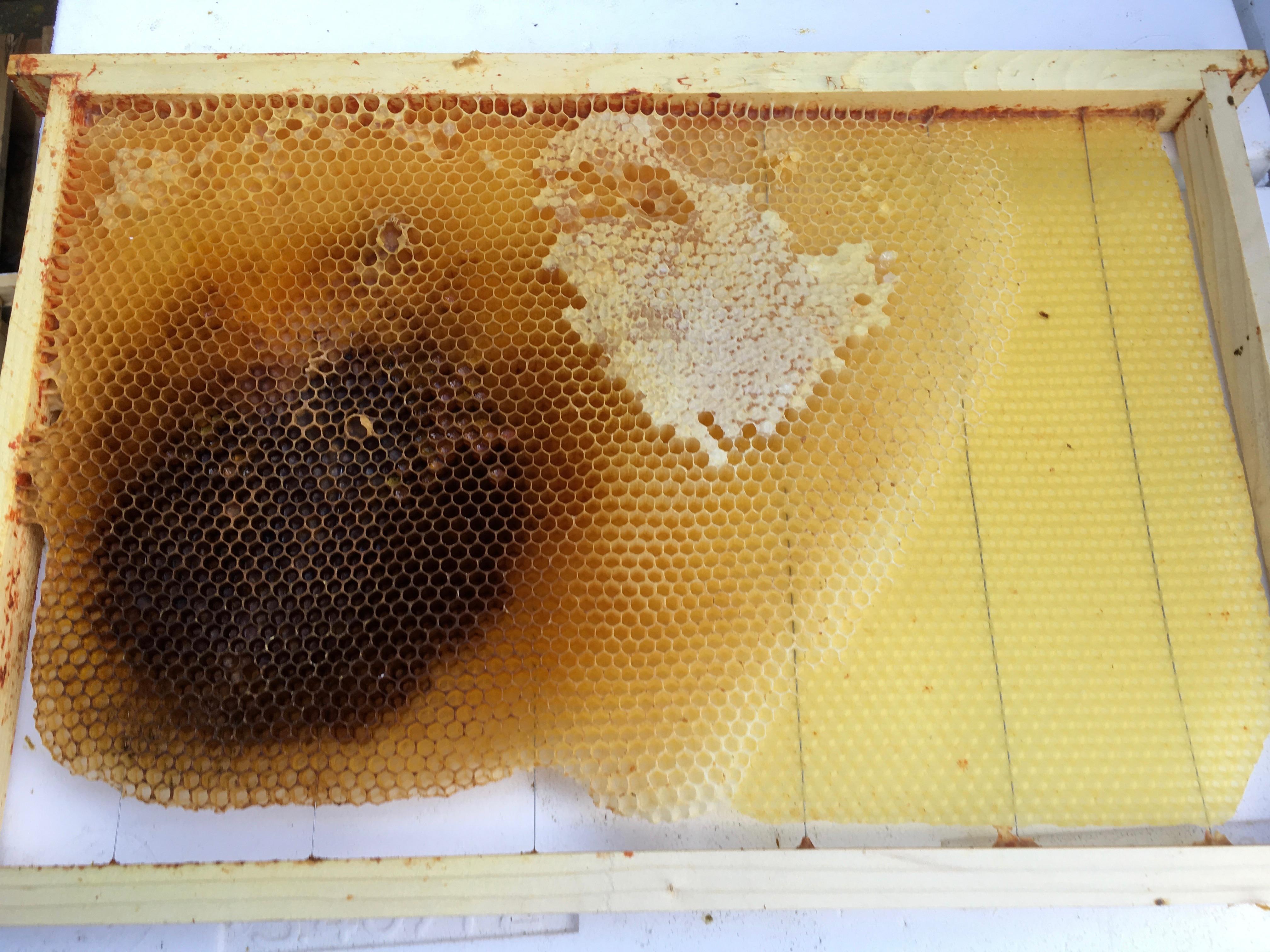 Ma ruche est bourdonneuse, que faire ?