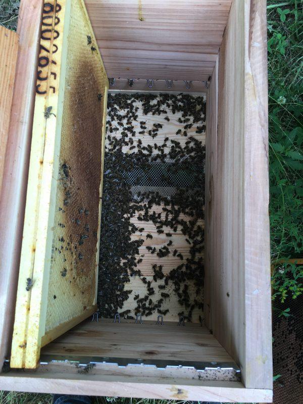 2016, mauvaise année pour l'apiculture