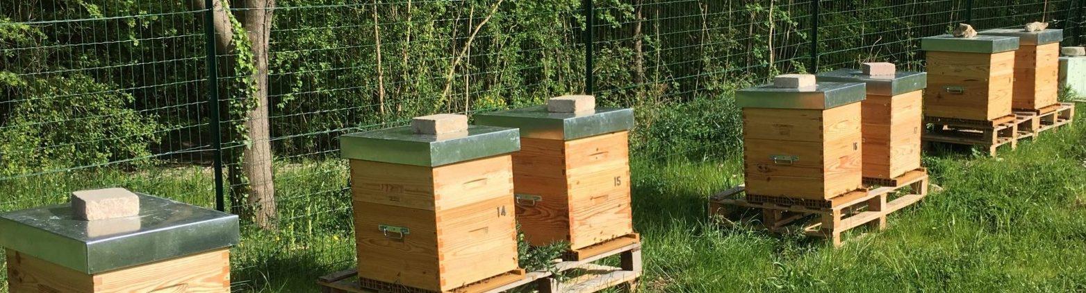 Parrainez une ruche en 2018