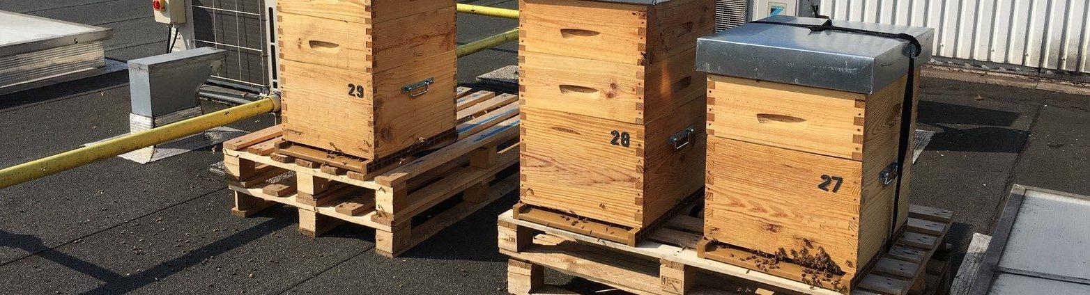 Louez une ruche en entreprise pour 2018