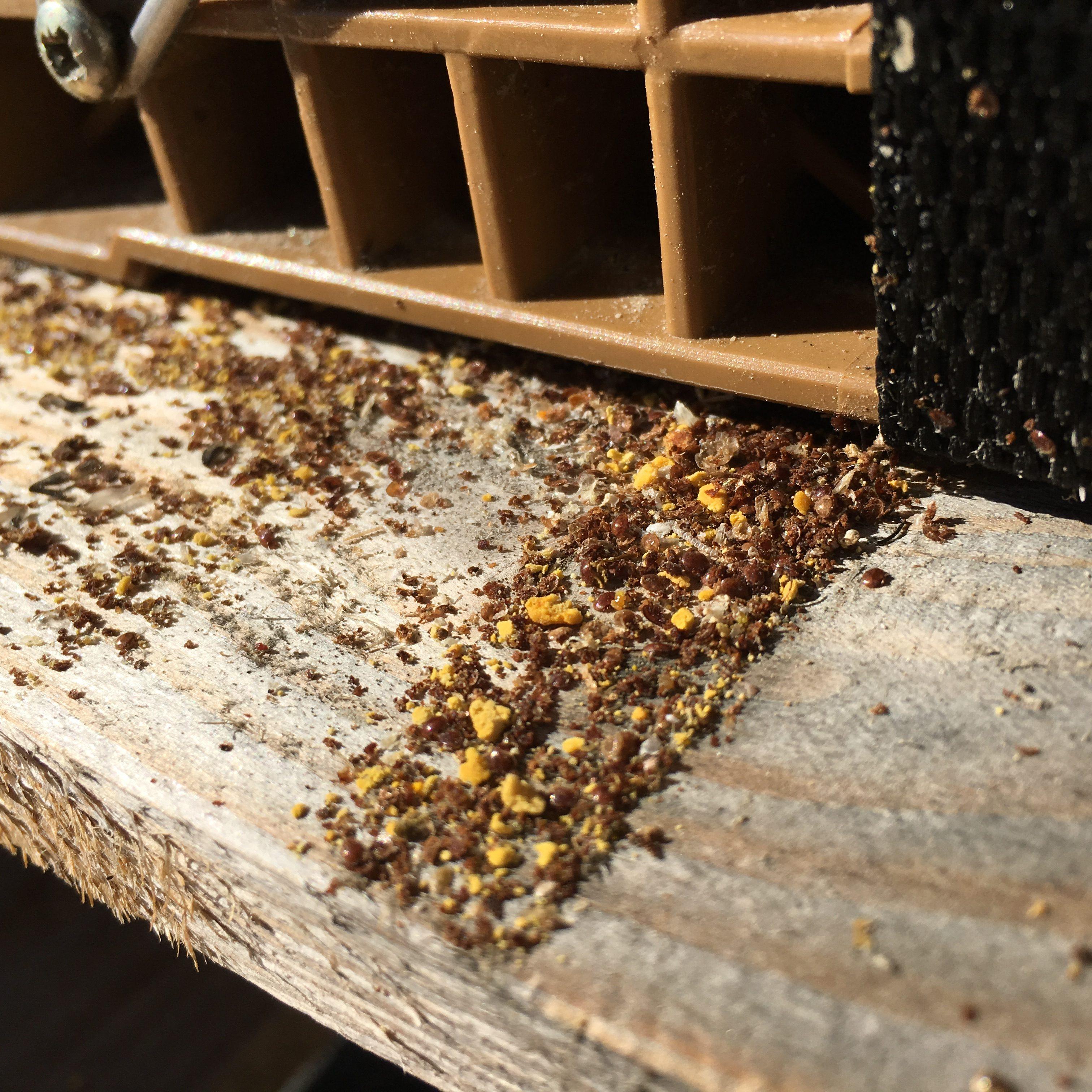 Traitement pour lutter contre la varroase