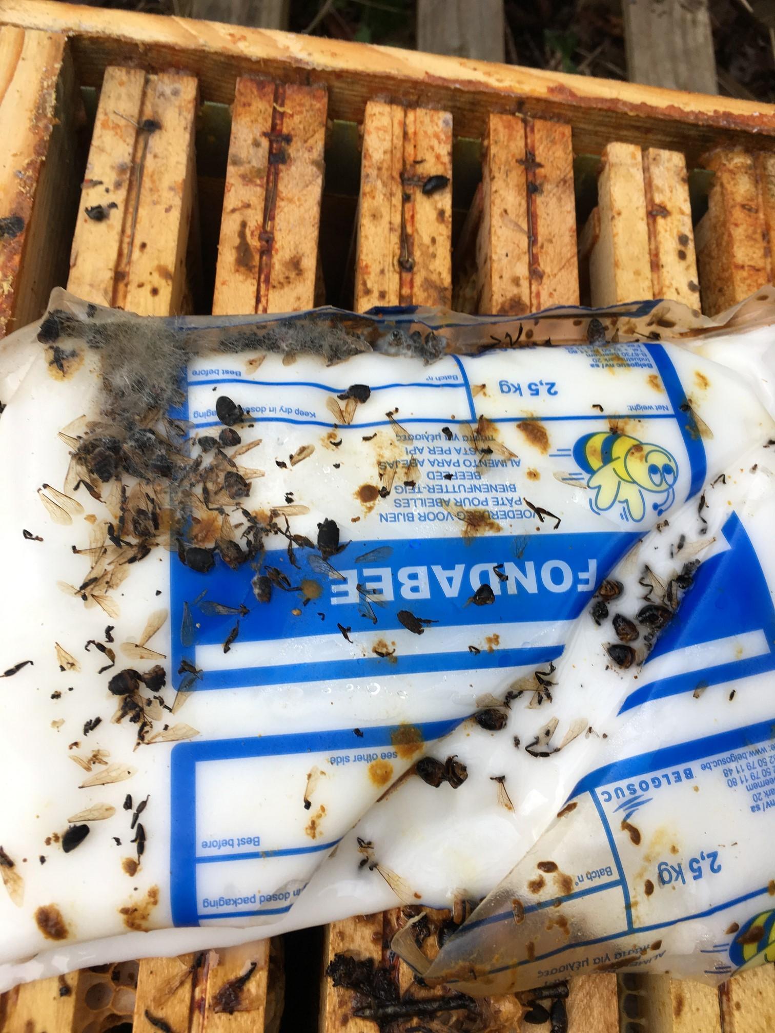 La ruchette est morte