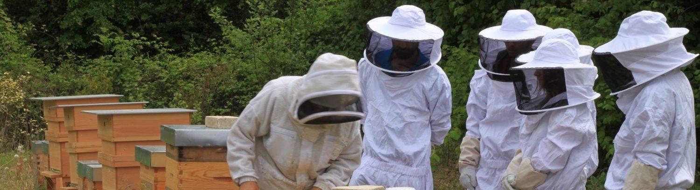 Initiez-vous à l'apiculture