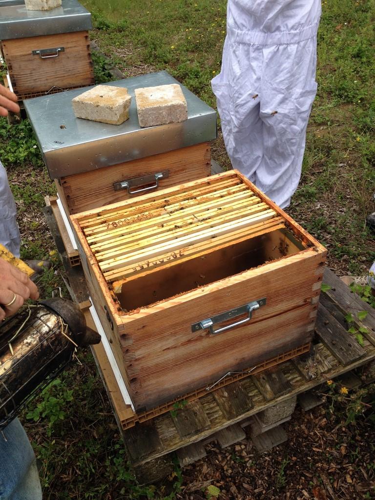 Les Ruchers d'Alexandre, apiculteur à Brueil en Vexin