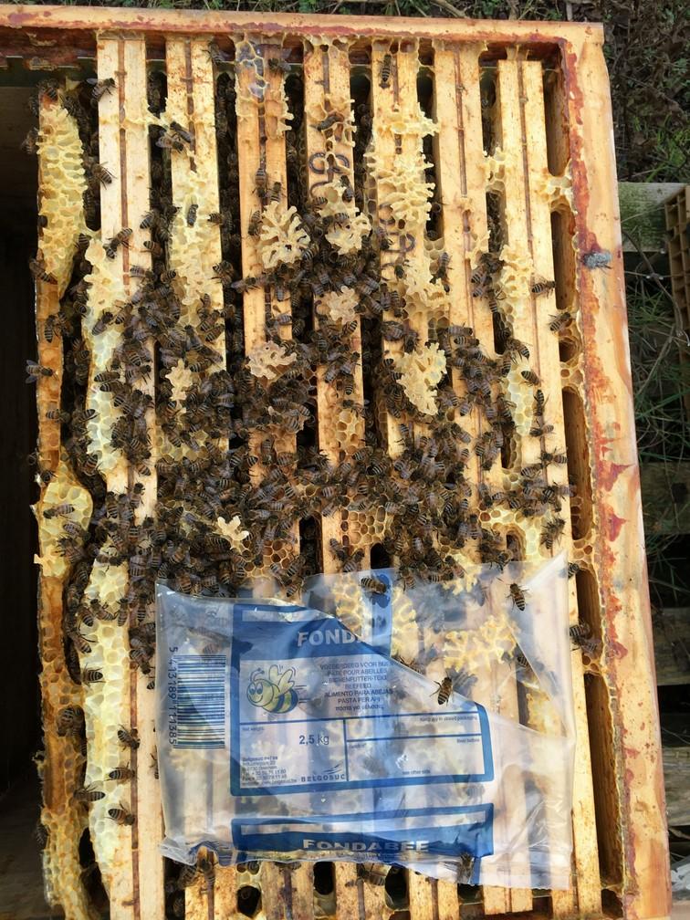 Les Ruchers d'Alexandre, apiculteur dans les Yvelines