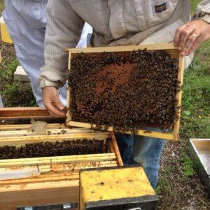 Alexandre Valgrès, apiculteur des Yvelines