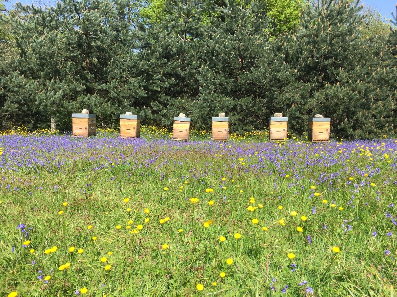 Les Ruchers d'Alexandre, exploitation apicole dans les Yvelines