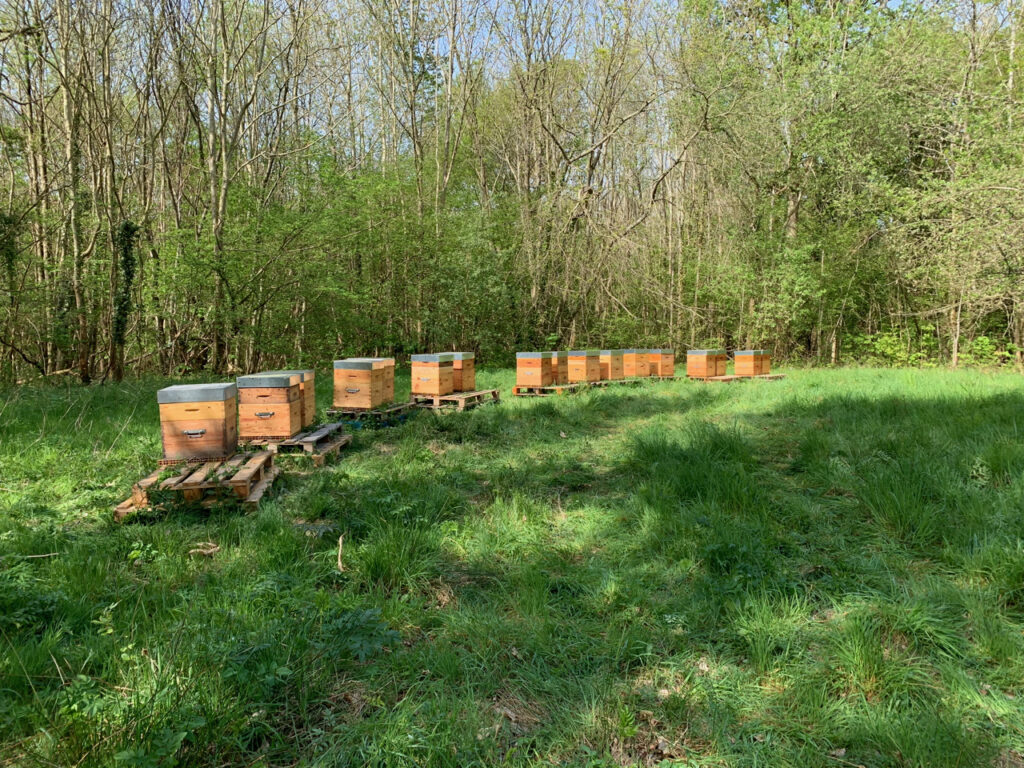 Alexandre Valgrès, apiculteur dans le Vexin