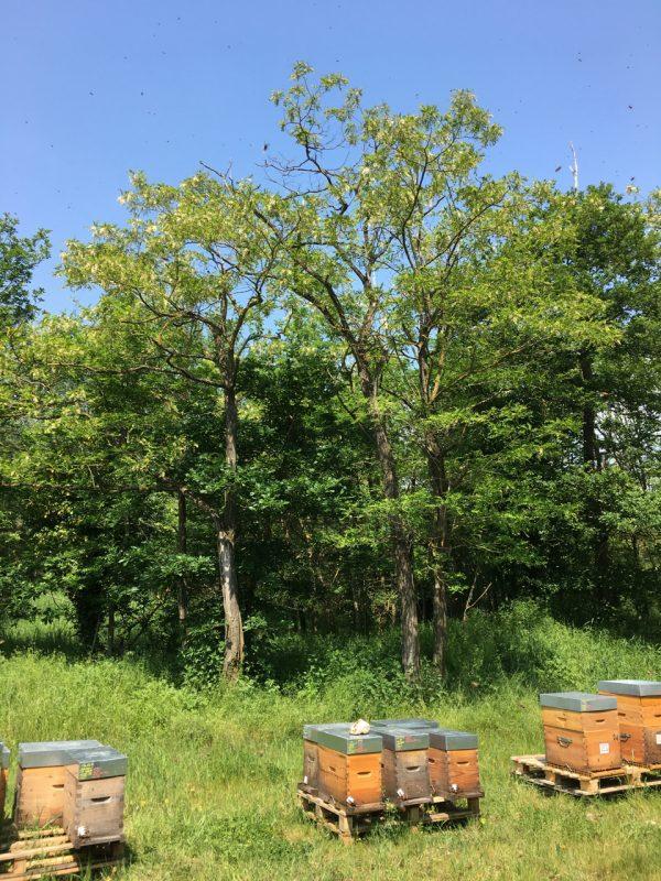 Les Ruchers d'Alexandre, apiculteur dans le Vexin