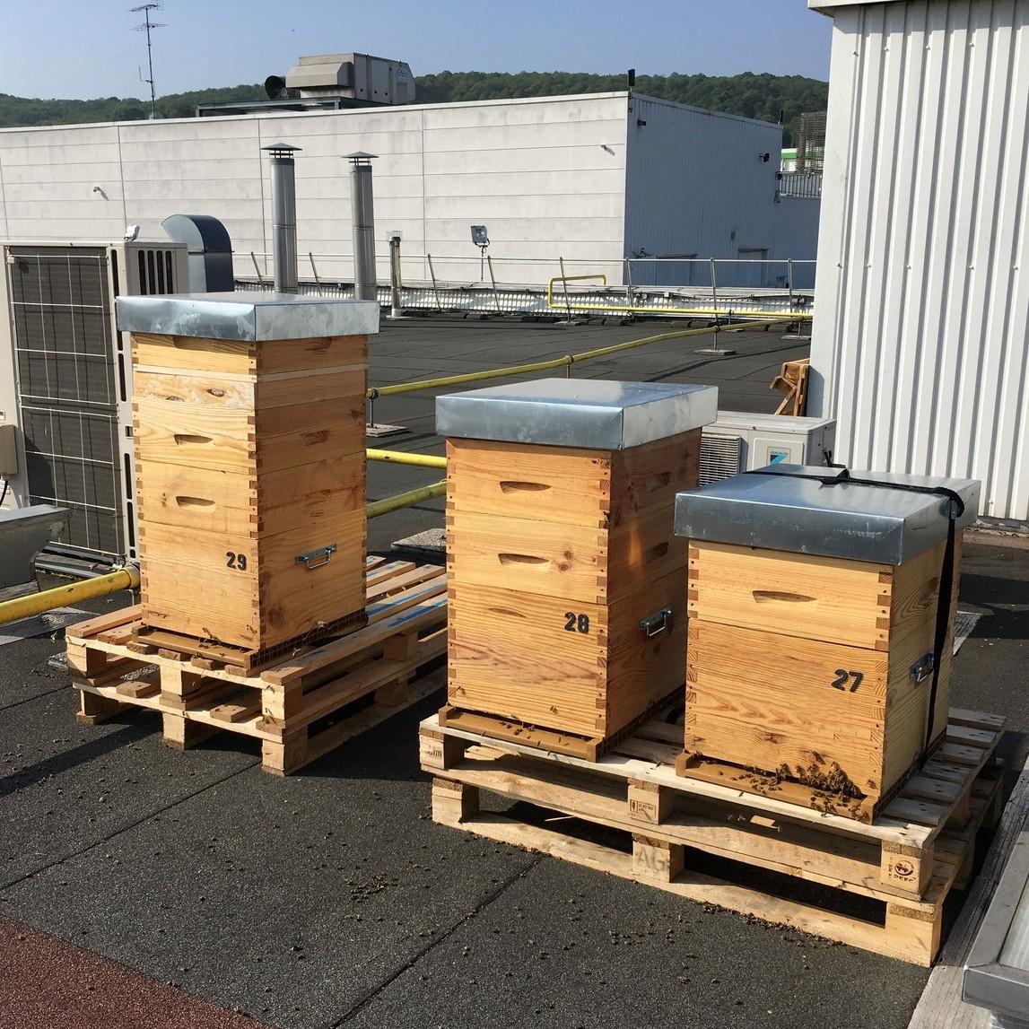 Location de ruches pour les entreprises en Yvelines et Hauts-de-Seine