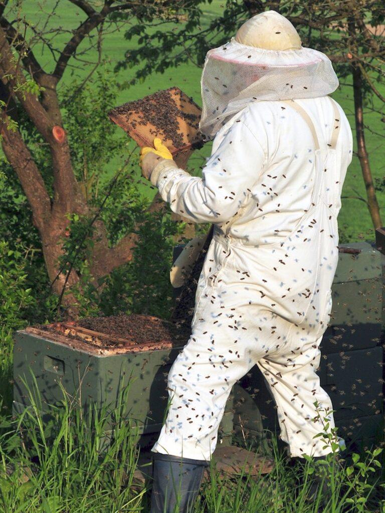 Matériel pour récupérer un essaim - Vêtement de protection