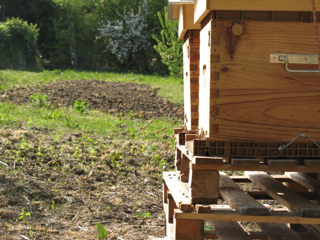 Parrainage de ruches
