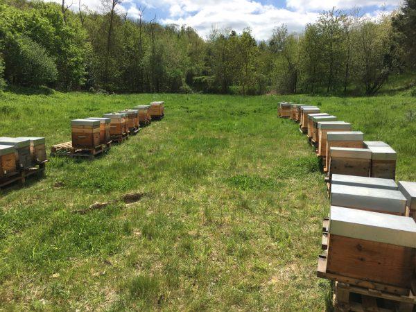 Les Ruchers d'Alexandre, parrainage de ruches dans les Yvelines