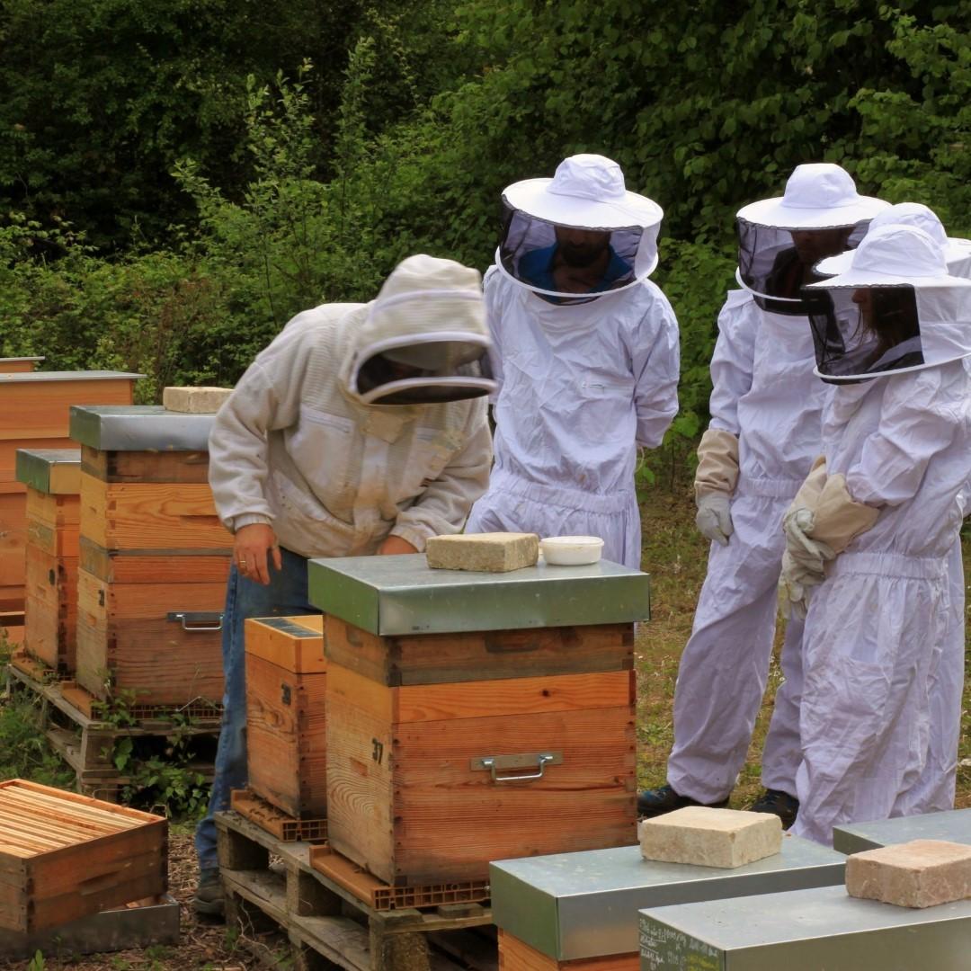 Location et parrainage de ruches dans les Yvelines